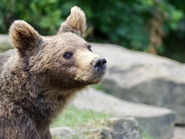 Выскочивший на трассу медвежонок удивил автомобилистов в Приморье