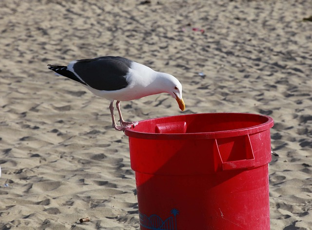 Щитовую превратили в «свинарник»: популярный в Приморье пляж загажен мусором