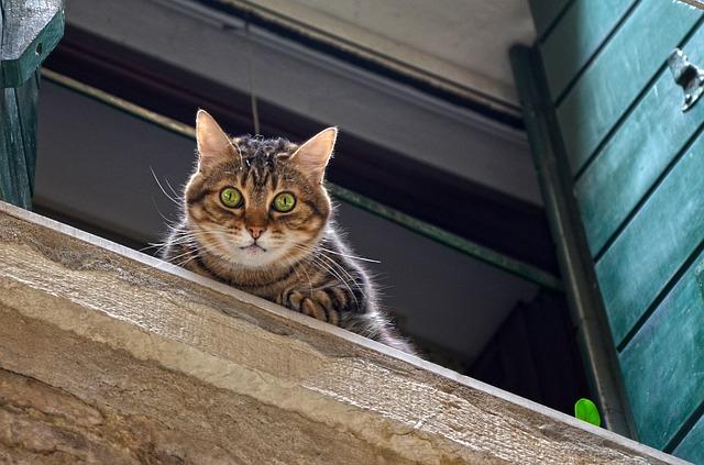 Советы: на что обратить внимание при выборе ветеринара