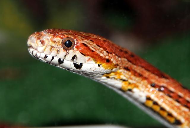 Во Владивостоке мужчина убил змею в квартире, чтобы не платить змеелову