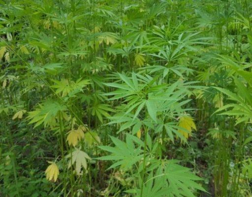 В Приморье 23-летний мужчина получил восемь лет колонии строгого режима за торговлю наркотиками