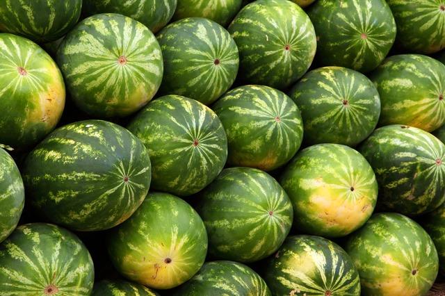 В Приморье собрали почти две тысячи тонн арбузов