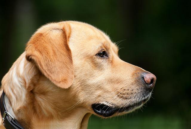Жители Находки пожаловались на огромное количество бездомных собак