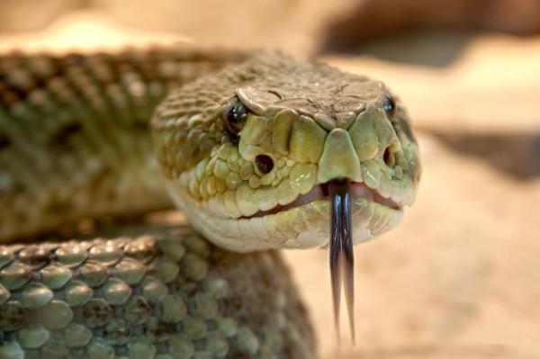 Во Владивостоке рядом с аптекой горожане увидели змею