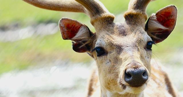 В Приморье нашли более тонны рогов лося и оленя без документов