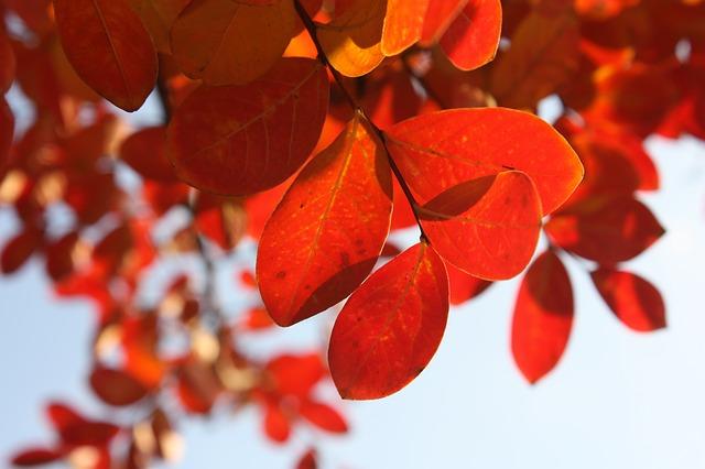 Погода в Приморье на выходных будет относительно тёплой