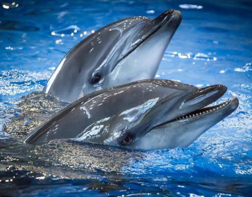 В Приморском океанариуме умер ещё один дельфин. Директор подал в отставку