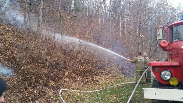 В Приморье за сутки потушили 17 лесных пожаров