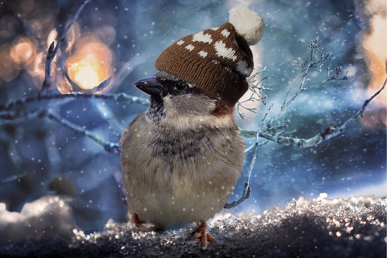 Штормовое предупреждение: во Владивостоке пошёл снег