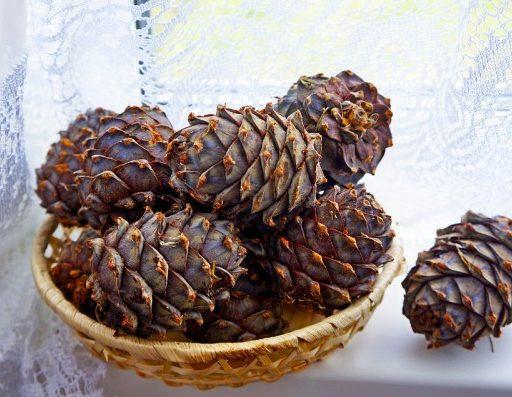 Из Приморья незаконно пытались вывезти 63 тонны кедрового ореха