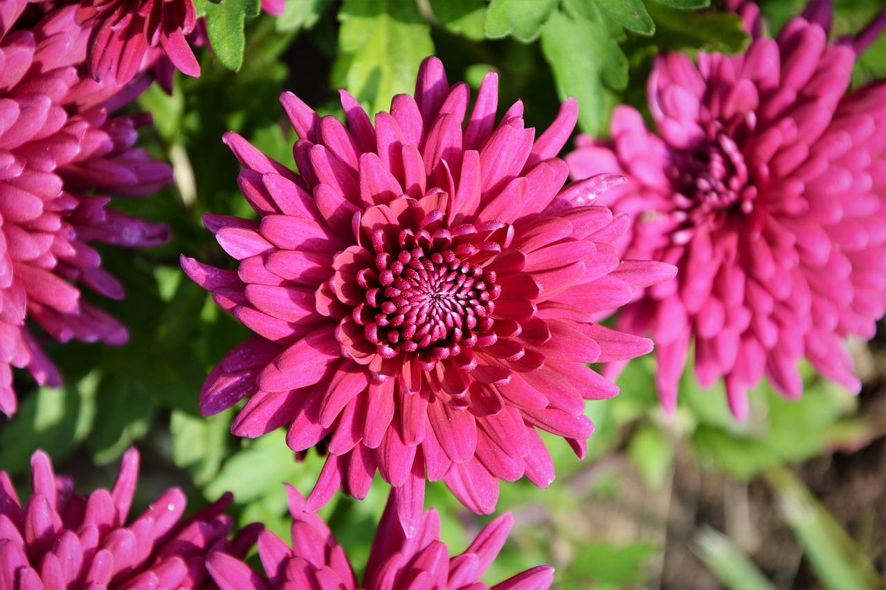 Какие цветы дарить женщинам на 8 Марта