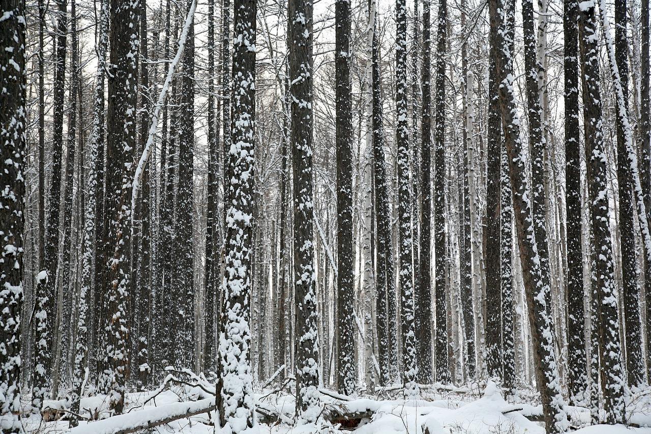 В 2017 году в Приморье не дали срубить защитные леса в водоохранной зоне на площади в десятки тысяч гектаров