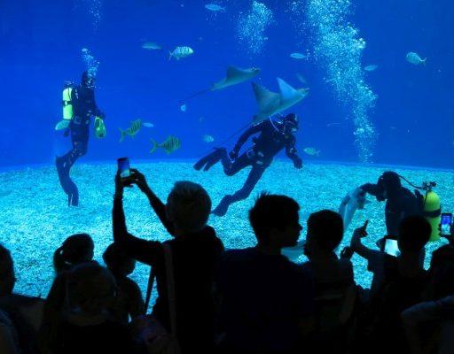 Билеты в Приморский океанариум подорожали