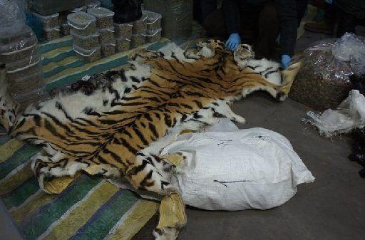 В Приморье таможенники задержали огромную партию частей особо ценных животных