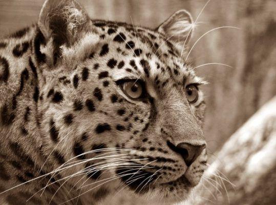 На Земле леопарда ввели пожароопасный период