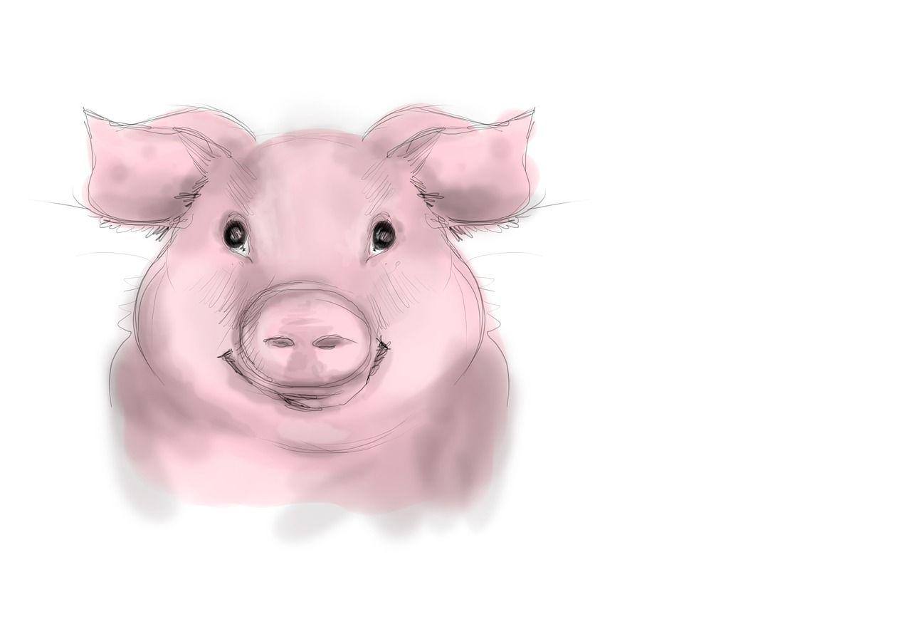 Специалистов для новых свинокомплексов будут готовить в Приморье
