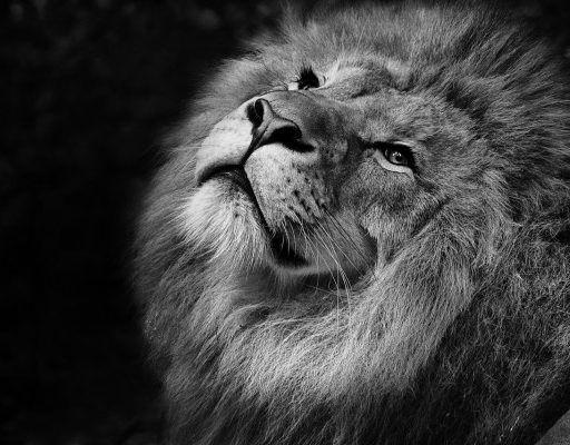 В Приморье всем желающим предложили гулять в парке с африканскими львами