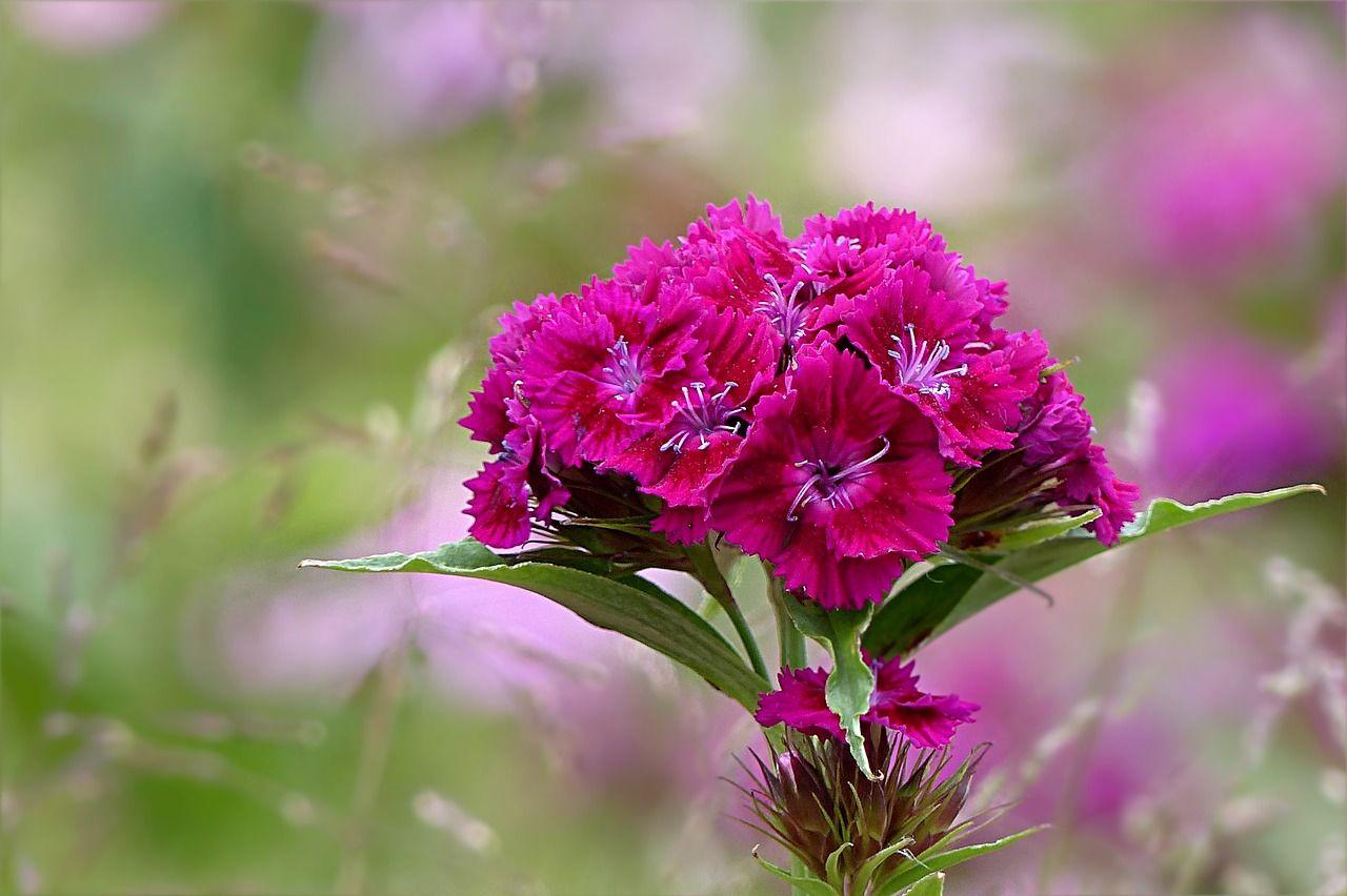 Венки из живых цветов за 25 тысяч рублей купят для администрации Приморья
