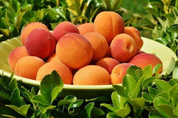 Владивостокцев будут учить выращивать персики и абрикосы