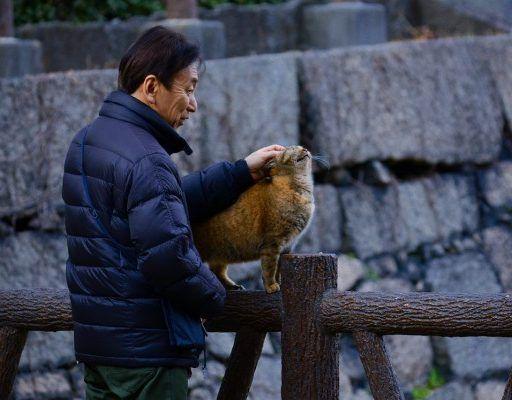 Во Владивостоке пройдёт фестиваль «Япония от Я до Я»