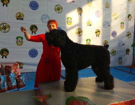 В выставке собак «Владивостокская весна» участвовали кинологи конвойной службы