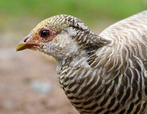 Жёсткое ДТП в Приморье: большая птица врезалась в лобовое стекло иномарки