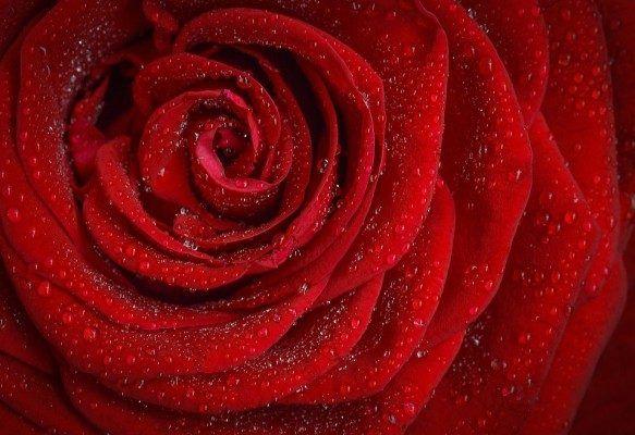 Пальму и красные розы вырастили во «вредном» цехе локомотиворемонтного завода в Приморье