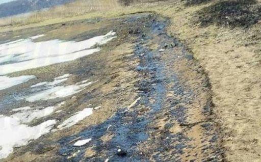 Во Владивостоке мазутом загрязнено шесть километров побережья Амурского залива — мэрия