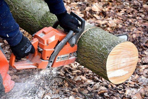 Приморец предстанет перед судом за незаконную рубку деревьев