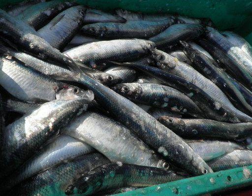 На складе во Владивостоке обнаружили пять тонн рыбы со ртутью