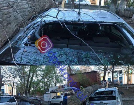 Огромное дерево рухнуло на автомобиль во Владивостоке