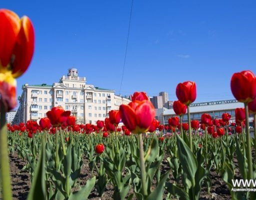 Популярность Владивостока среди туристов подтвердили и в Airbnb