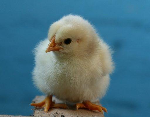 На одной из птицеферм Приморья уничтожат всё поголовье после обнаружения птичьего гриппа