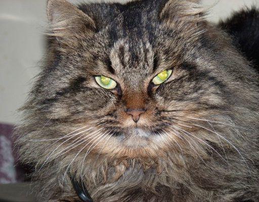 В Приморье после лечения выпустили в дикую природу лесного кота, который задавил 14 кур