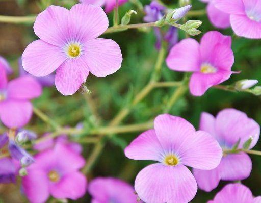 «Грустно друзья, хочется плакать»: Ботанический сад Владивостока пожаловался на «вандалов»
