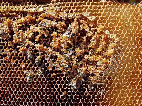 В Приморье говорили о создании лаборатории по проверке качества мёда
