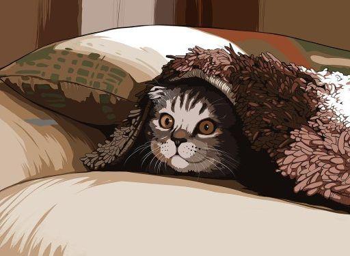 В Приморье в ведре с гудроном обнаружили котят