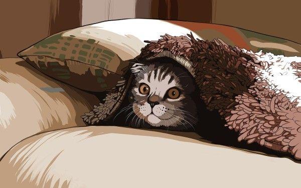 В Москве задержали кошку из Владивостока, которая летела в Киев