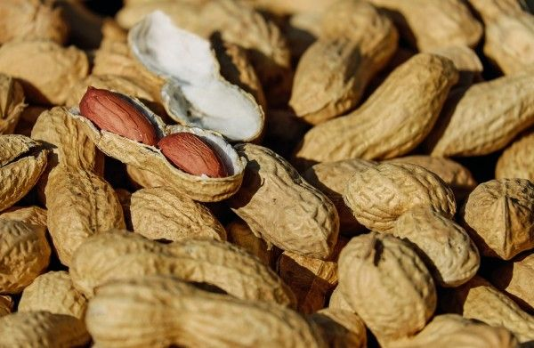 В Приморье не пустили почти 20 тонн токсичного арахиса