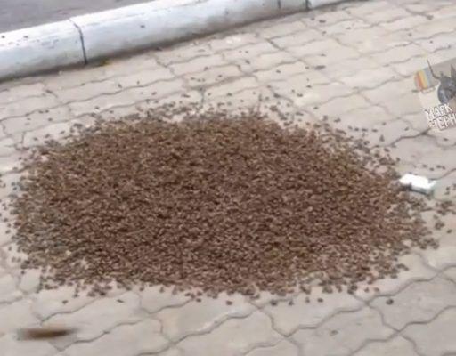 Огромный рой пчёл возле ЗАГСа наводил ужас на жителей Уссурийска