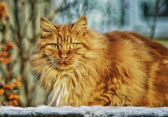 Как часто нужно гладить кошку, рассказал Куклачёв