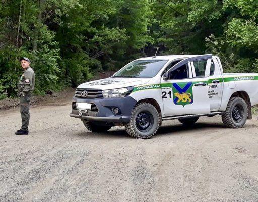Второй квартал 2018 года в Приморье обошёлся без громких задержаний браконьеров в лесах