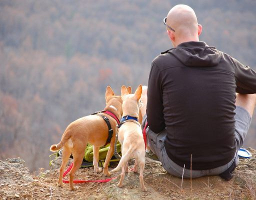 Выставка фотографий собак и их хозяев пройдёт во Владивостоке