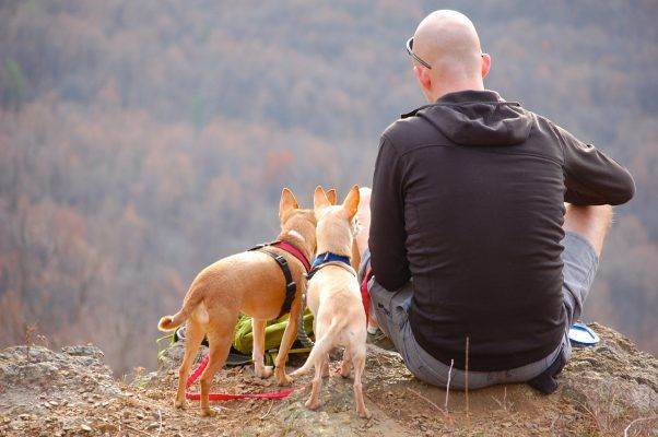 Уход за собаками во время беременности