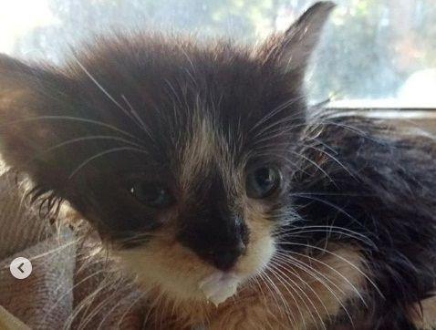 Маленького котёнка спасли во Владивостоке, достав его из трубы