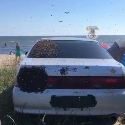 Огромный рой пчёл атаковал машину в Приморье