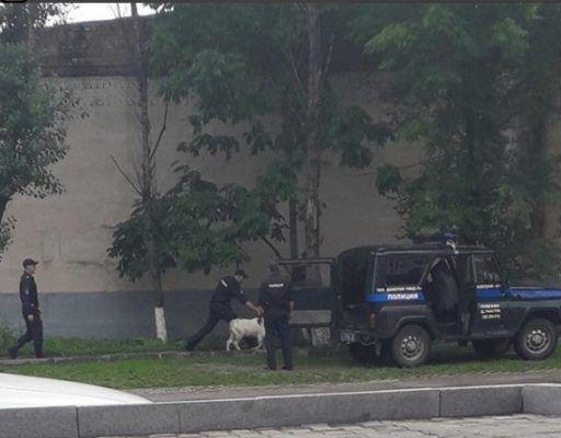 Полицейские поймали козла в Уссурийске