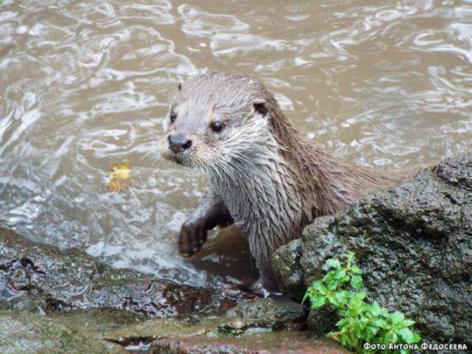 Забавное видео о играх хищных зверей опубликовал Приморский сафари-парк