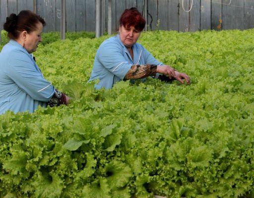 Сотрудникам фермы в Приморье выплатили часть долгов по зарплате после забастовки
