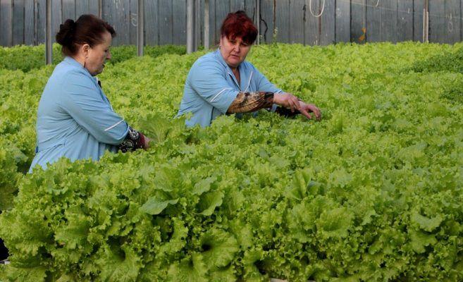 Приморской «Суражевке» удалось избежать банкротства по иску налоговиков